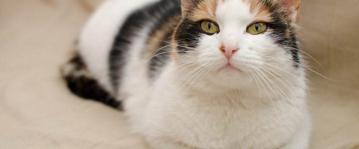 Melyik macskaalom az igazi?